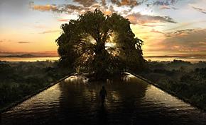 Photo of El árbol de la vida: primeras impresiones