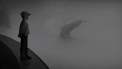 Photo of M. Ward – Shark